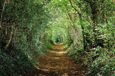 chambre deco nature tableau trompe l 39 oeil chemin vert qui s 39 enfonce dans la forêt