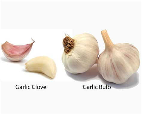 clove of garlic garlic clove vs bulb thosefoods com
