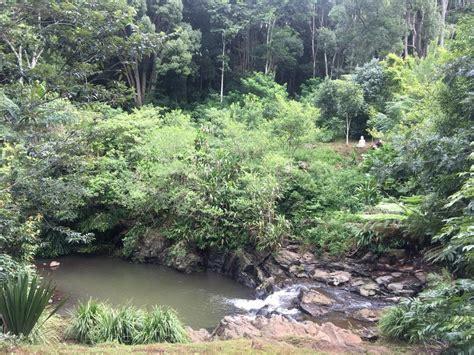 bodhi tree portland buddhism at the bodhi tree carpe diem education international gap year programs gap year
