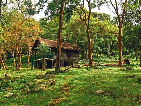 Forest Stay: Log Huts and Tented Cottages at Kyathadevara
