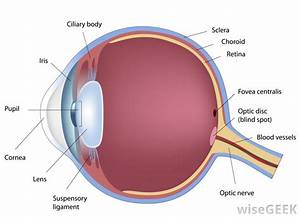 Image Result For Physics Eye Diagram