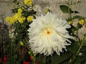 Names Of White Flowers 28 Desktop Wallpaper ...