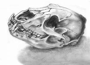 Best 25+ Bear skull ideas on Pinterest | Animal skull ...