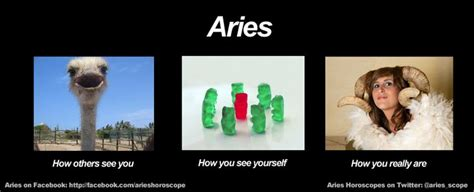 Aries Memes - funny aries meme zodiac memes pinterest
