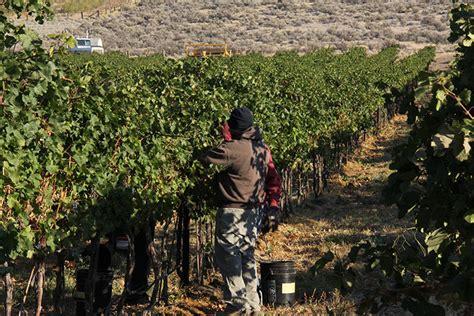 vineyard vineyards 11b unit