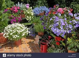 balkon balkonbepflanzung blumenkaesten blumen sommerblumen With whirlpool garten mit balkon blumen