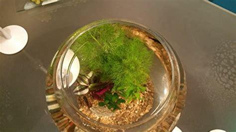 deko fürs büro minibiotop im goldfischglas 30 cm komplett set variante