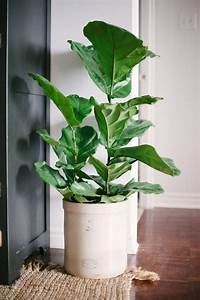 Loving Pretty House Plants - The Sweetest Occasion