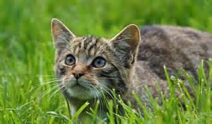 cat habitat cats facts diet habitat information