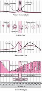 Problems With Ovulation - Women U0026 39 S Health Issues