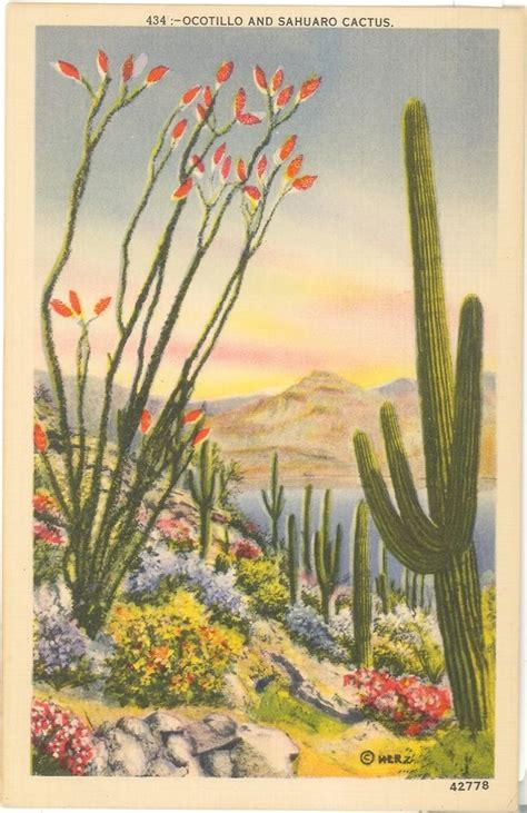 vintage cactus linen postcard ocotillo sahuaro cactus