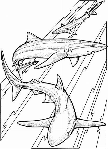 Shark Coloring Pages Sharks Printable Drawing Swimming