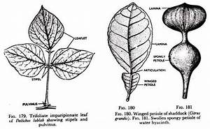 The Foliage Leaf  U2013 Development And Parts  With Diagram