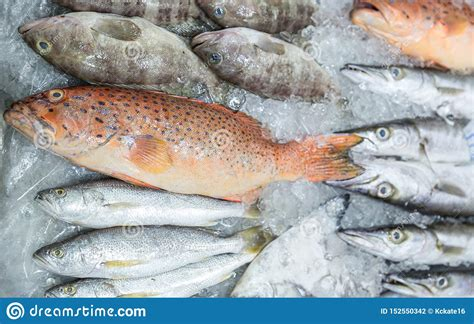 grouper fish banded market tasting seafood thailand ice fresh freshly bass