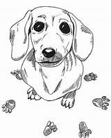 Dachshund Dog Coloring Pages Drawing Sausage Printable Wiener Colouring Dogs Drawings Animal Sheets Adult Sketch Doxie Template Heaven Puppy Colorful sketch template