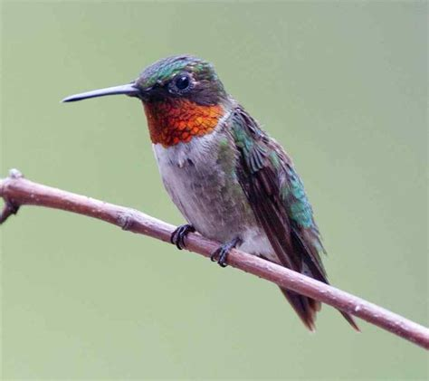 1000 images about bird watchers welcome on pinterest