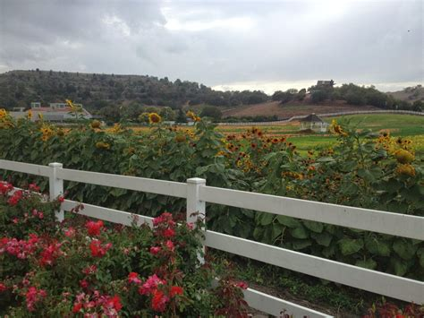 Experiencing Los Angeles On Campus And On The Farm At Cal