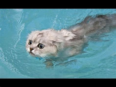funny cats  water compilation  funny stories