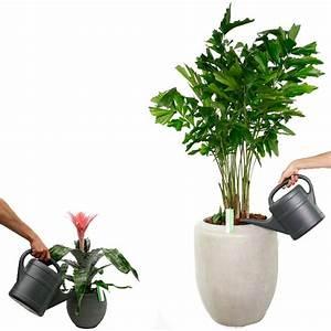 Große Zimmerpflanzen Wenig Licht : zimmerpflanzen gie en und wasserbedarf ~ Markanthonyermac.com Haus und Dekorationen