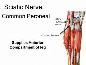 Nerves. - ppt video online download