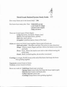 Third Grade Skeletal System Study Guide