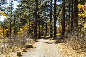 4 Stunning National Forests in Southern California