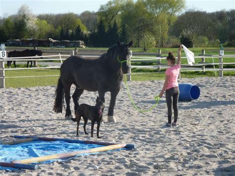 apollon bodenarbeit mit dem pferd