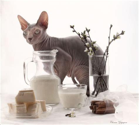 cats   life images  pinterest latvia