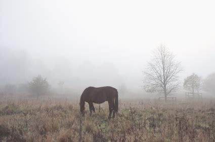 atemwegserkrankungen beim pferd dr susanne weyrauch