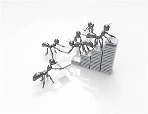 Diagram Of Ants Stock Vector  Illustration Of Rendering
