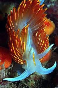 Marine Life Sea Snails Nudibranch
