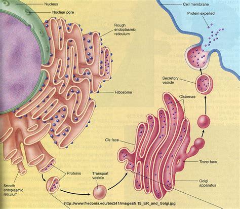 ibbio licensed   commercial   membranes