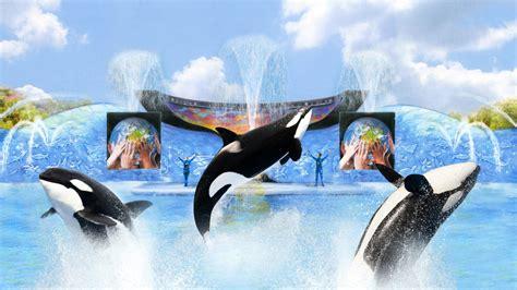 Orca Training Sessions Now Part Guest Experience