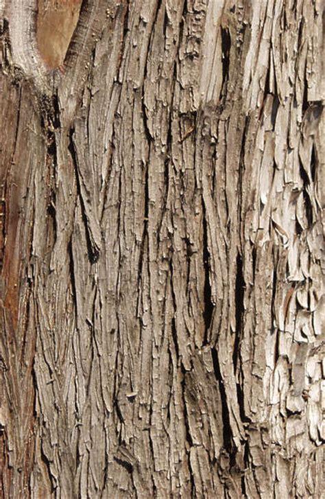 Wood Planks Texture Seamless