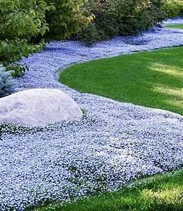 Weiß Blühende Stauden : bodendecker kollektion blau und wei steingartenstauden bei baldur garten ~ Markanthonyermac.com Haus und Dekorationen