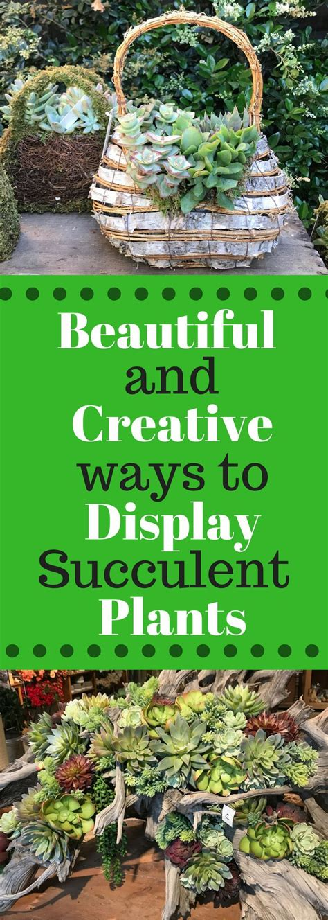 creative ways to plant succulents 1747 best images about gardening on pinterest