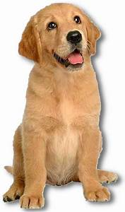 pet sitting dog walking pet care With be a dog sitter