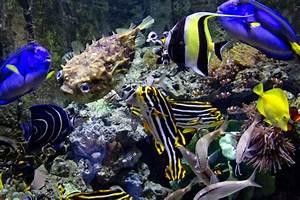 Optimale Aquarium Temperatur : what temperature is good for freshwater tropical fish cuteness ~ Yasmunasinghe.com Haus und Dekorationen