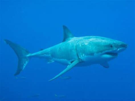 warum sind haie immer  bewegung