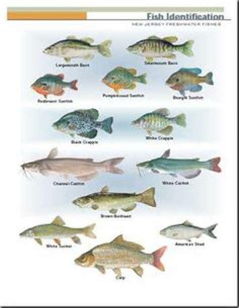 images  fantastic fish  florida pond