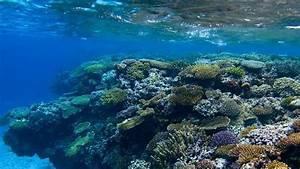Preserving New Caledonia U2019s Marine Environment