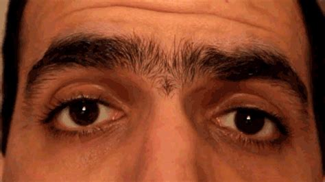 Bushy Eyebrows Meme - 16 things all people with thick eyebrows know to be true