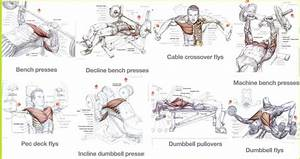 Best Chest Exercises For Mass