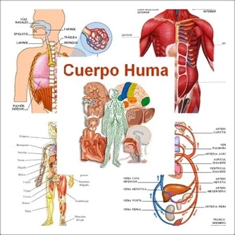 BERRIAK333 TERCER CICLO DE PRIMARIA: El CUERPO HUMANO