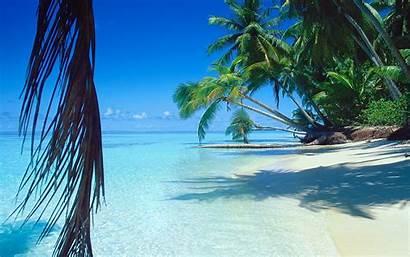 Palm Tropical Trees Landscape Island Nature Sea