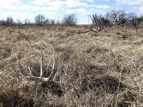 shed southern utah 100 shed utah 2016 shed antler ban