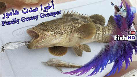 greasy finaly grouper