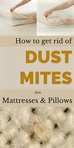 how to get rid of mattress 17 best ideas about bed bugs With bed bugs pillows getting rid