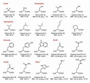 Amino Acids  Proteins