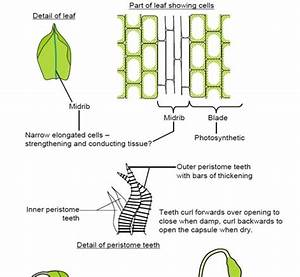 Label The Structures On This Diagram Of A Moss
